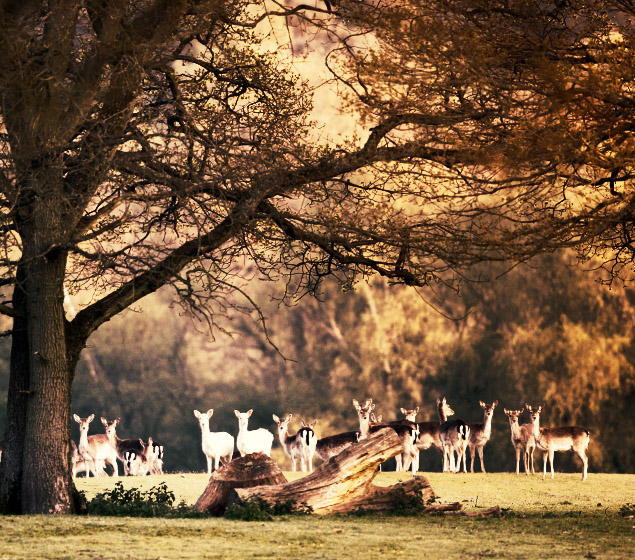 photograph of the new forest